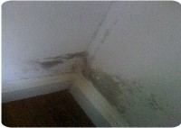 Mould Removal Harrogate